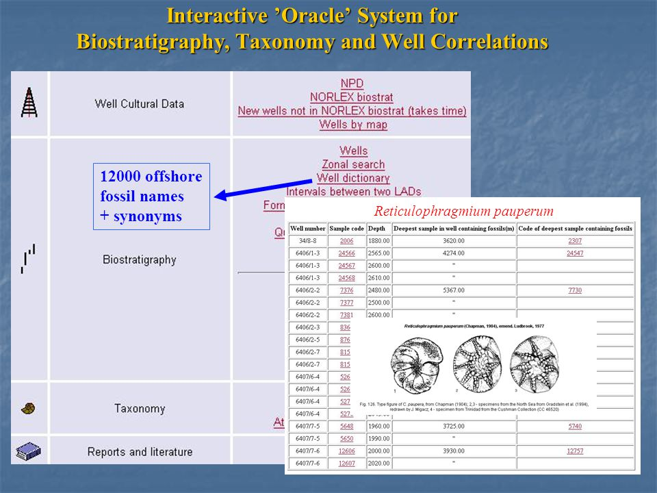 Interactive 'Oracle' System for Biostratigraphy, Taxonomy and Well Correlations