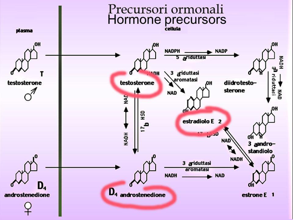 Hormone precursors