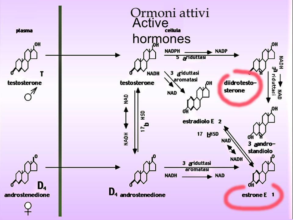 Active hormones