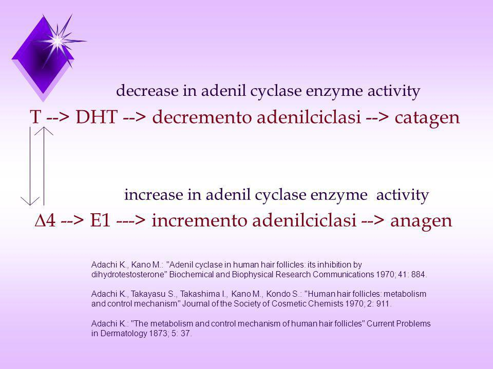 T --> DHT --> decremento adenilciclasi --> catagen