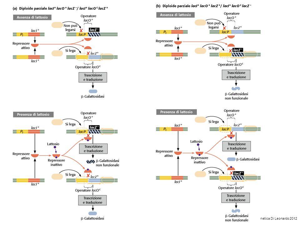 Genetica Di Leonardo 2012