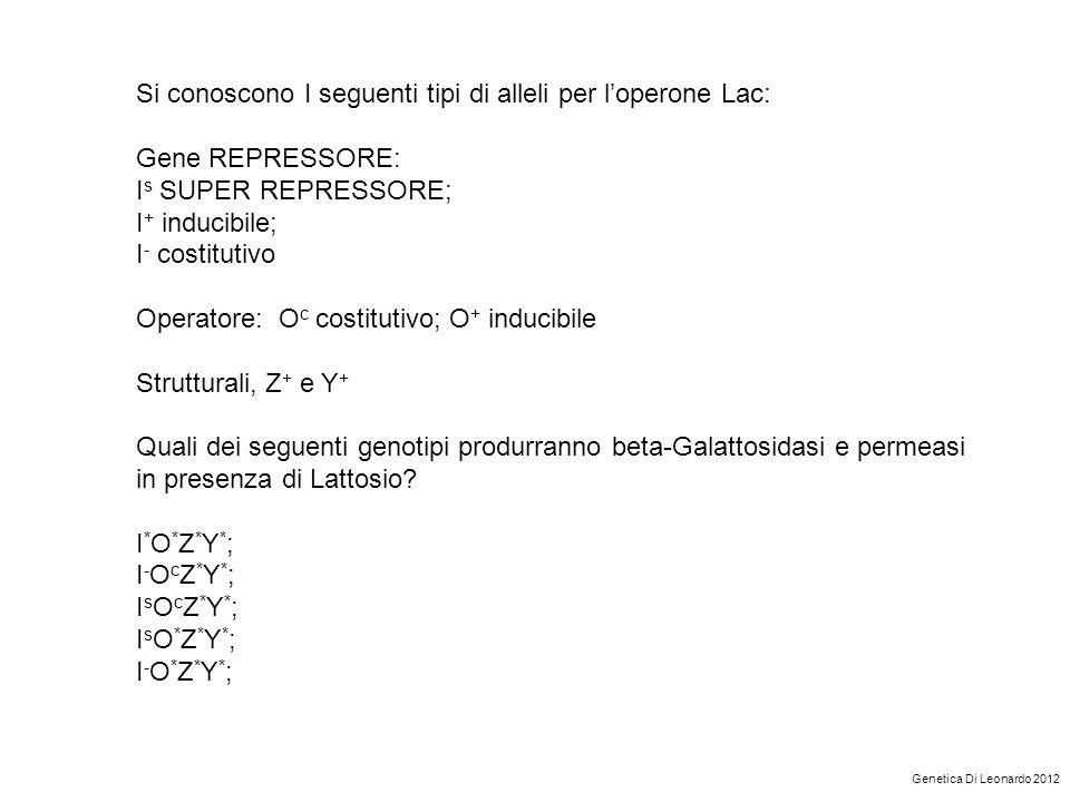 Si conoscono I seguenti tipi di alleli per l'operone Lac: