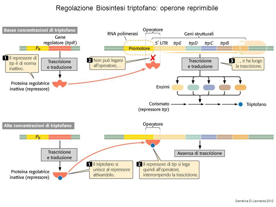 Regolazione Biosintesi triptofano: operone reprimibile