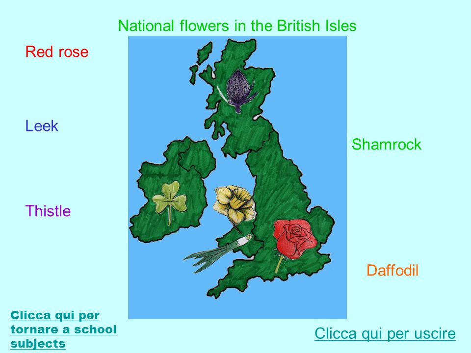National flowers in the British Isles