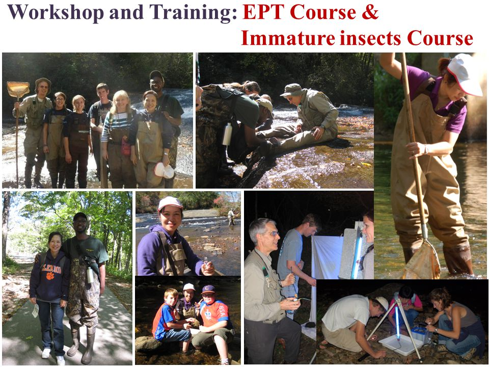 Workshop and Training: EPT Course & Immature insects Course