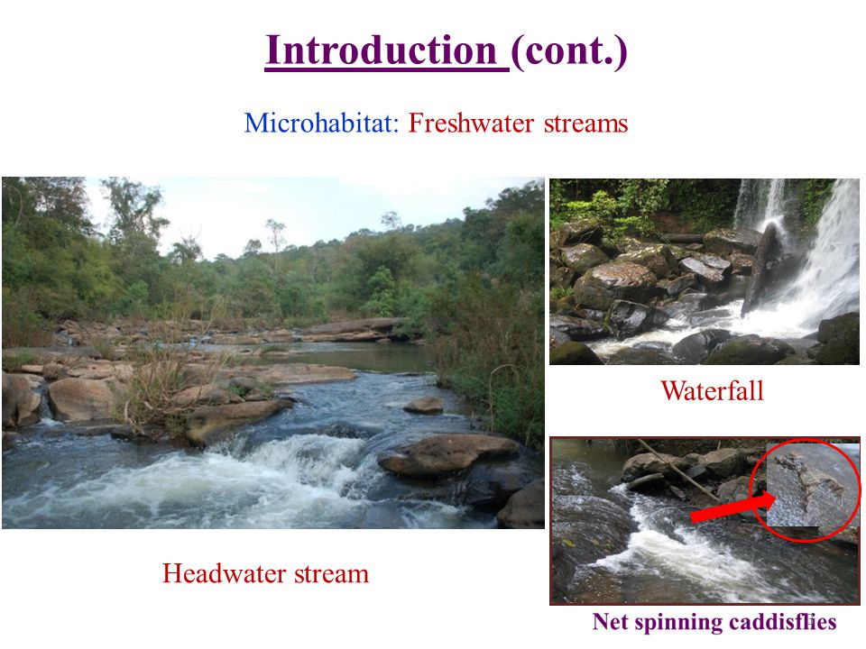 Introduction (cont.) Microhabitat: Freshwater streams Waterfall