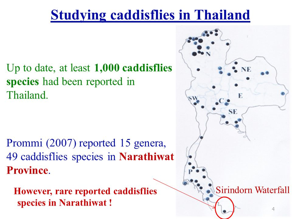 Studying caddisflies in Thailand