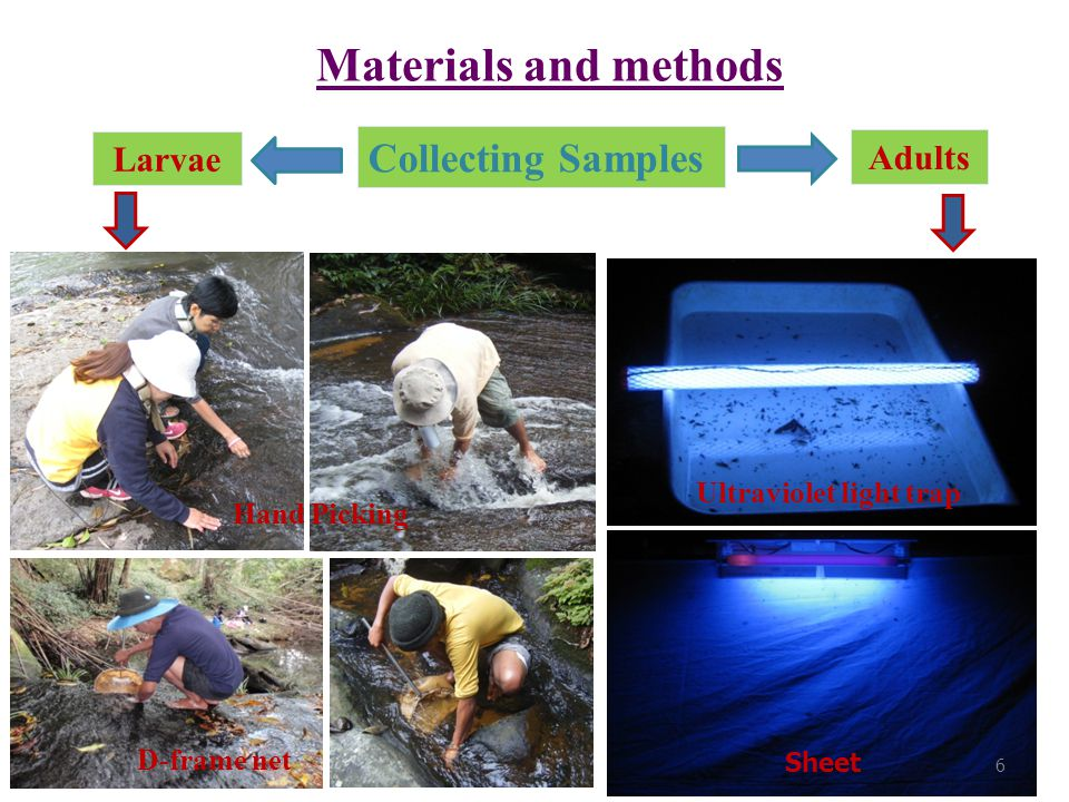 Materials and methods Collecting Samples Larvae Adults