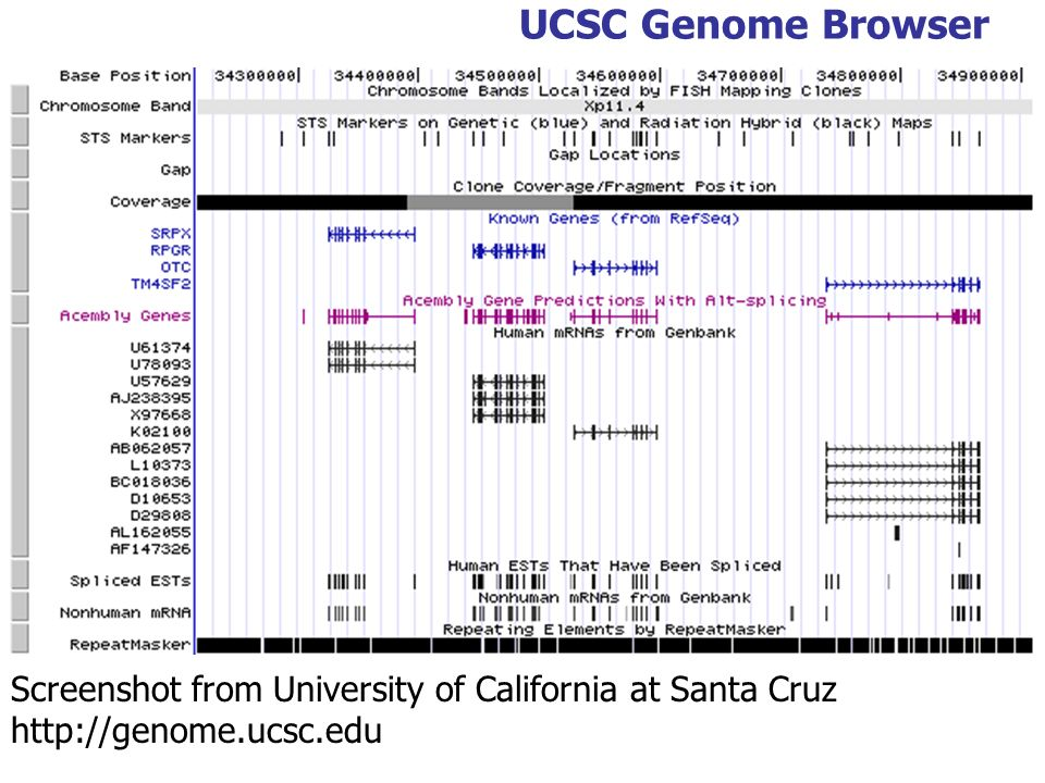 UCSC Genome Browser Screenshot from University of California at Santa Cruz http://genome.ucsc.edu
