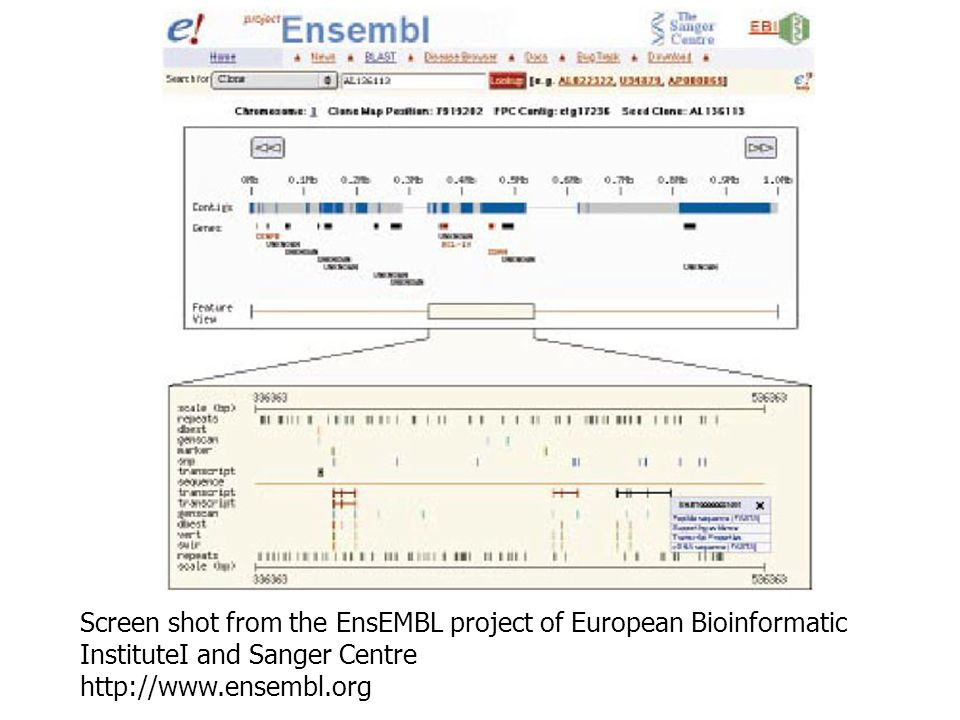 Screen shot from the EnsEMBL project of European Bioinformatic InstituteI and Sanger Centre