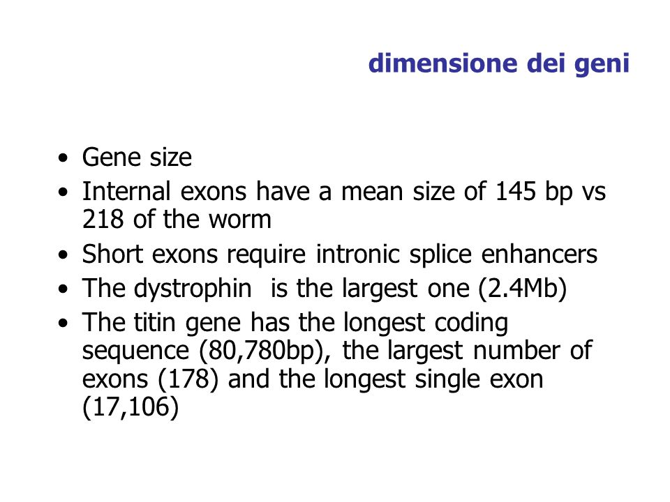 dimensione dei geni Gene size. Internal exons have a mean size of 145 bp vs 218 of the worm. Short exons require intronic splice enhancers.