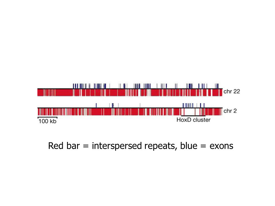 Red bar = interspersed repeats, blue = exons