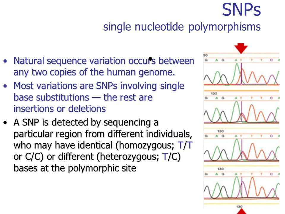 SNPs single nucleotide polymorphisms