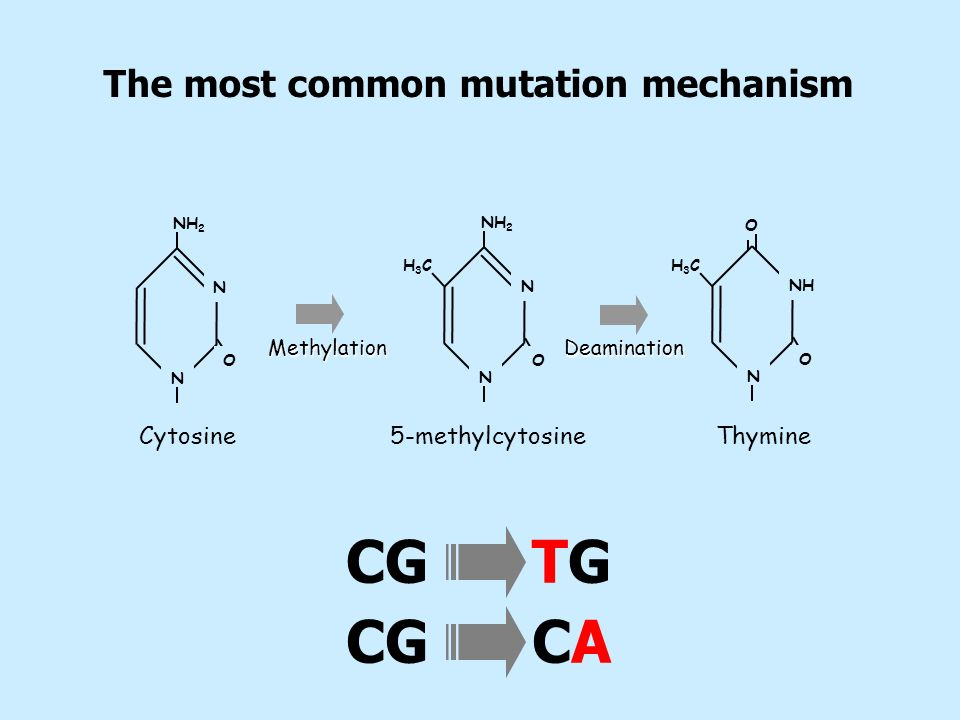 The most common mutation mechanism