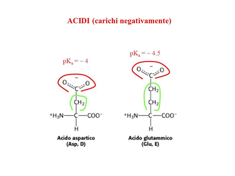ACIDI (carichi negativamente)