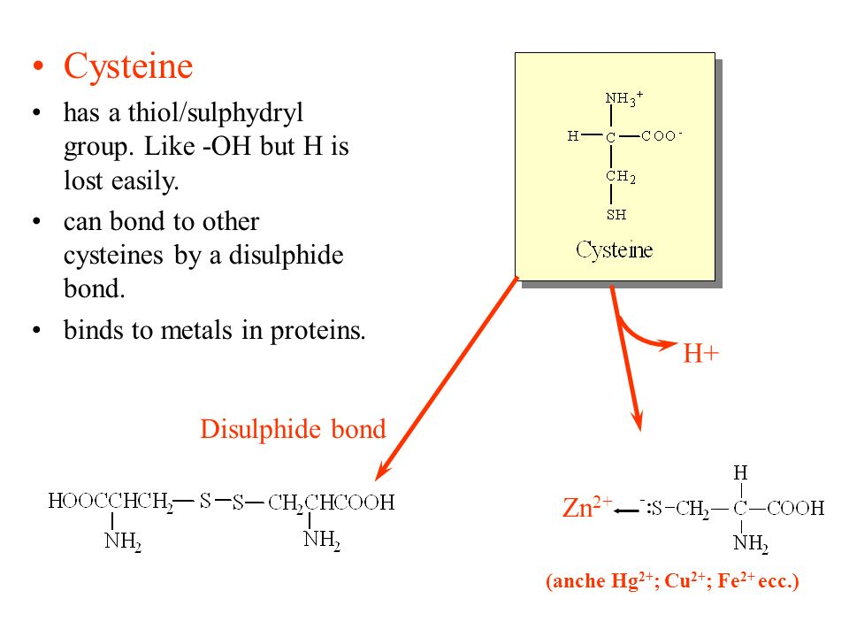 Cysteine has a thiol/sulphydryl group. Like -OH but H is lost easily.