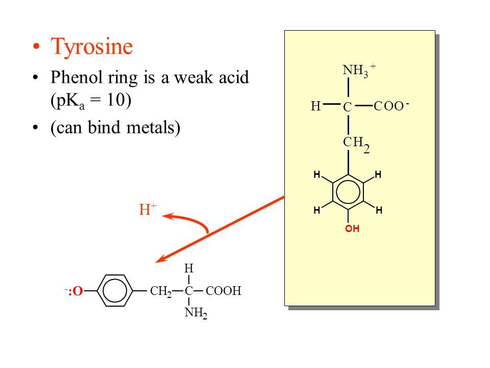 Tyrosine Phenol ring is a weak acid (pKa = 10) (can bind metals) H+ N