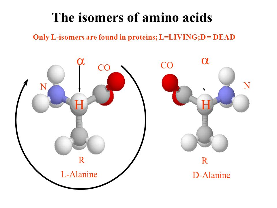 The isomers of amino acids