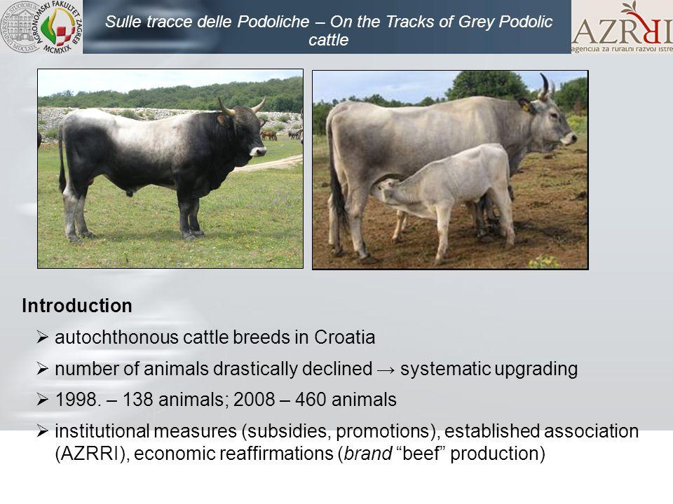 Sulle tracce delle Podoliche – On the Tracks of Grey Podolic cattle