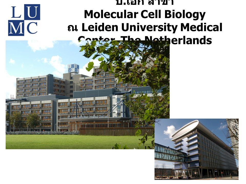 ป.เอก สาขา Molecular Cell Biology ณ Leiden University Medical Center, The Netherlands