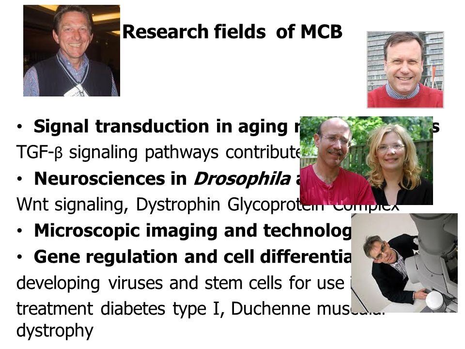 Research fields of MCB Signal transduction in aging related diseases