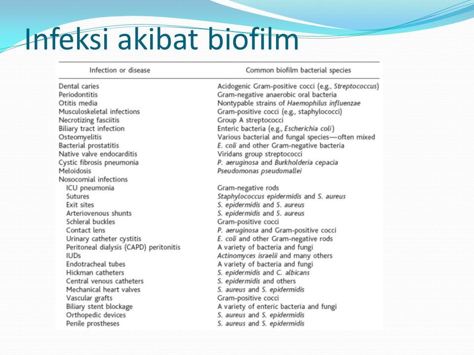 Infeksi akibat biofilm