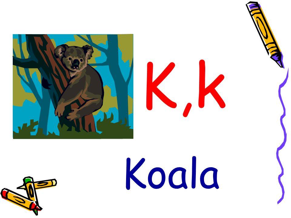 K,k Koala