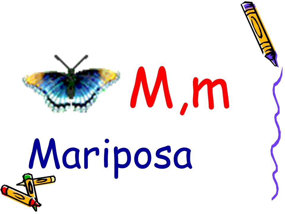 M,m Mariposa