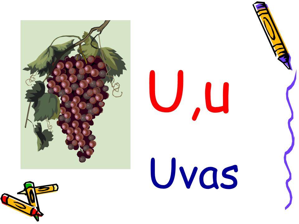 U,u Uvas