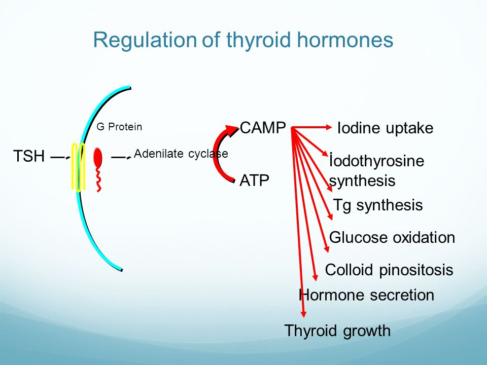 Regulation of thyroid hormones