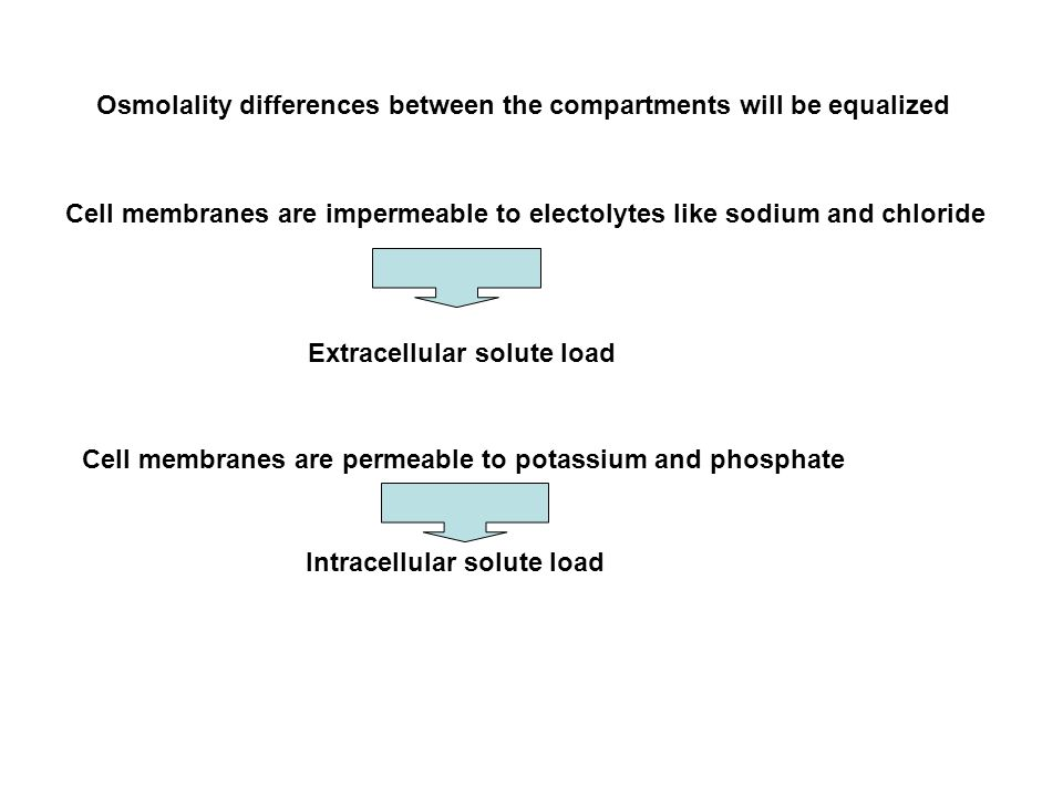 Osmolality differences between the compartments will be equalized