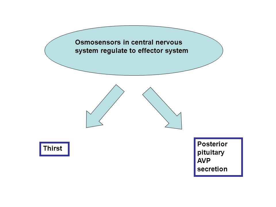 Osmosensors in central nervous system regulate to effector system