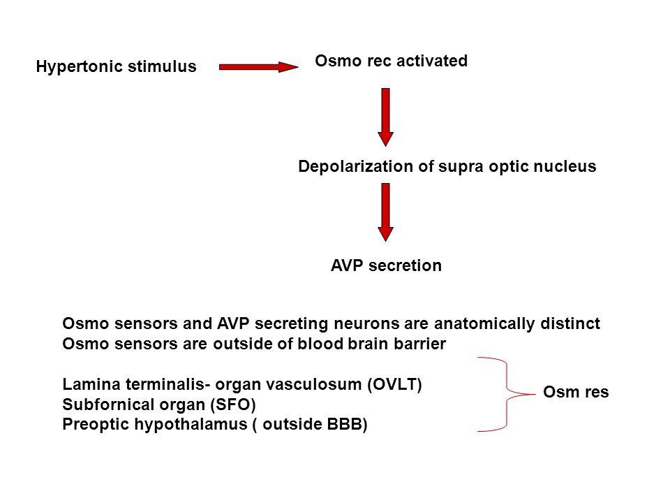 Osmo rec activated Hypertonic stimulus. Depolarization of supra optic nucleus. AVP secretion.