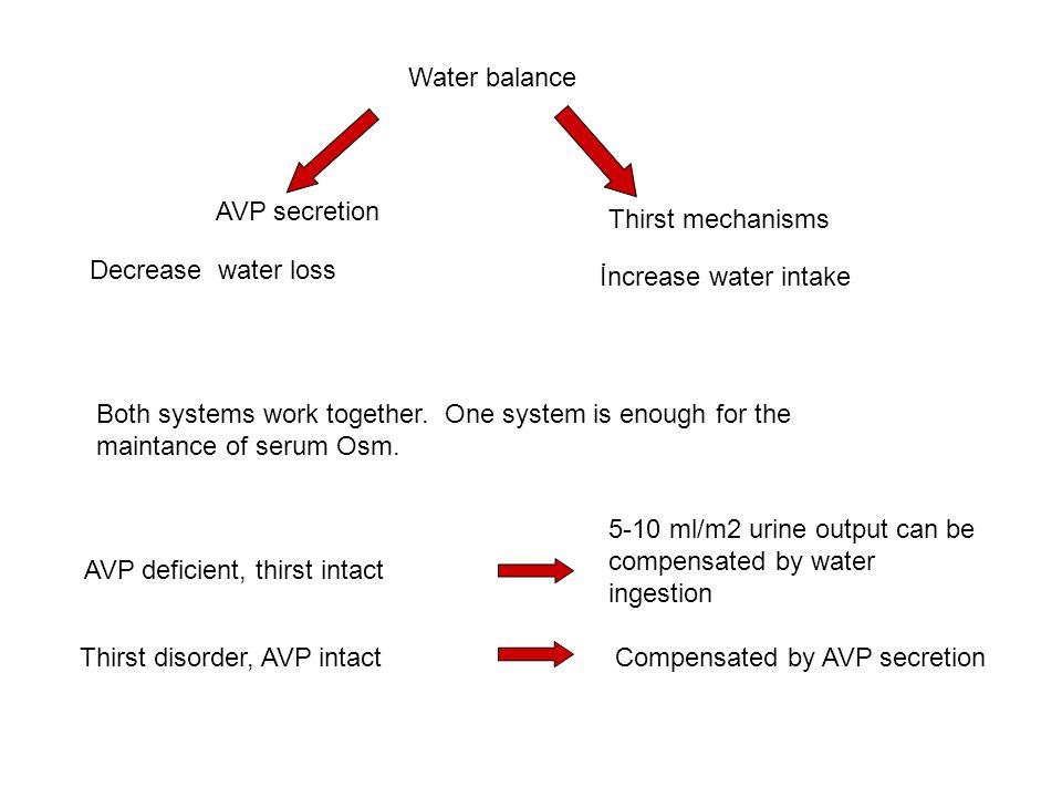 Water balance AVP secretion. Thirst mechanisms. Decrease water loss. İncrease water intake.