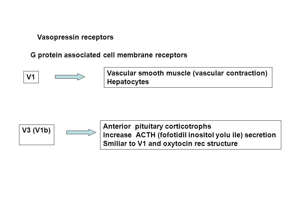 Vasopressin receptors