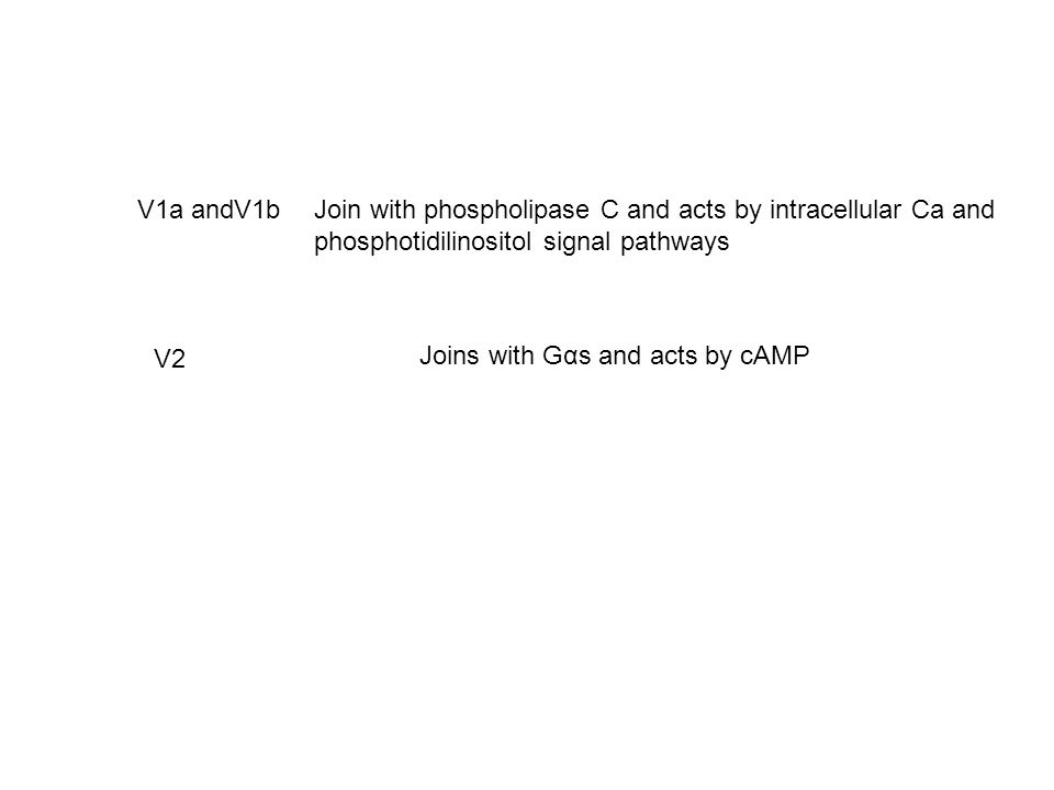 V1a andV1b Join with phospholipase C and acts by intracellular Ca and. phosphotidilinositol signal pathways.