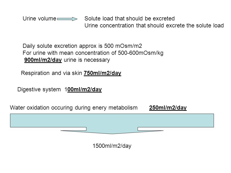 Urine volume Solute load that should be excreted. Urine concentration that should excrete the solute load.