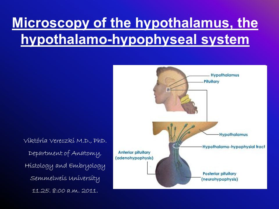 Microscopy of the hypothalamus, the hypothalamo-hypophyseal system