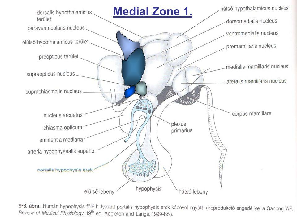 Medial Zone 1.