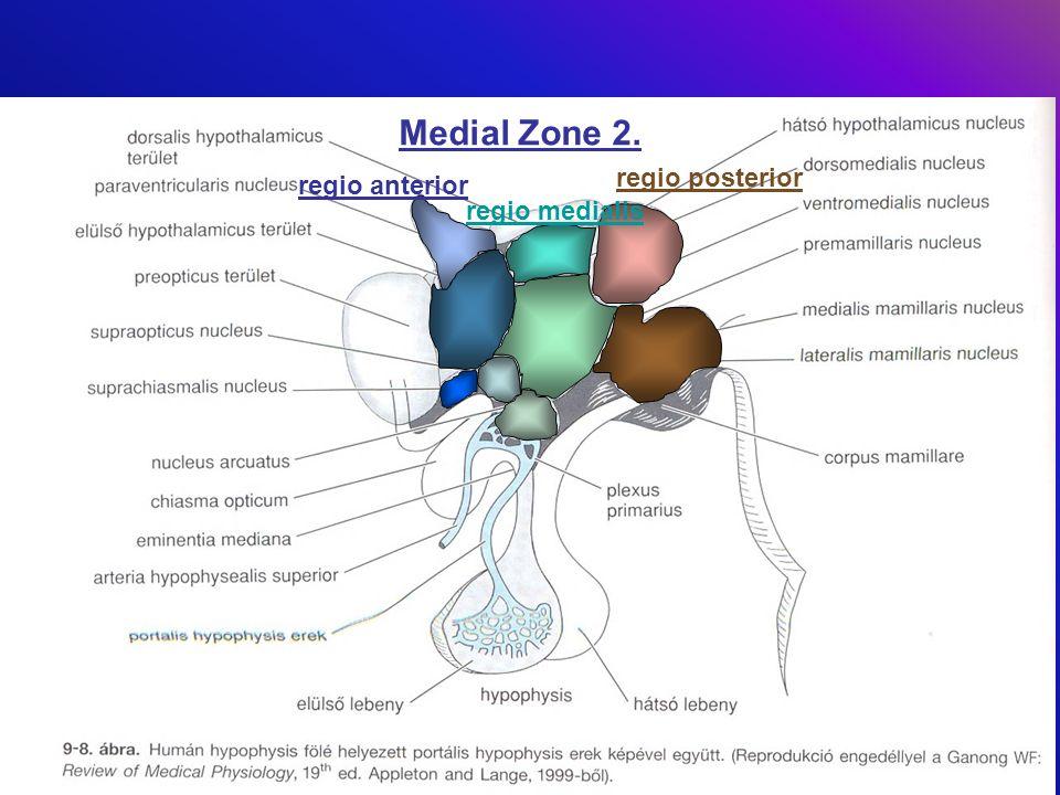 Medial Zone 2. regio posterior regio anterior regio medialis