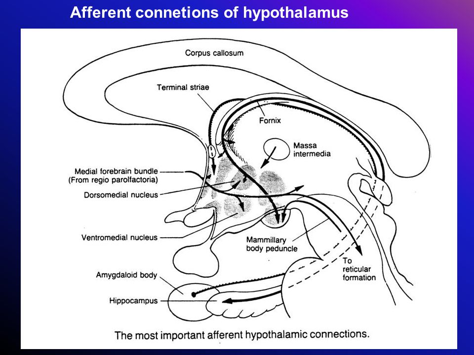 Afferent connetions of hypothalamus