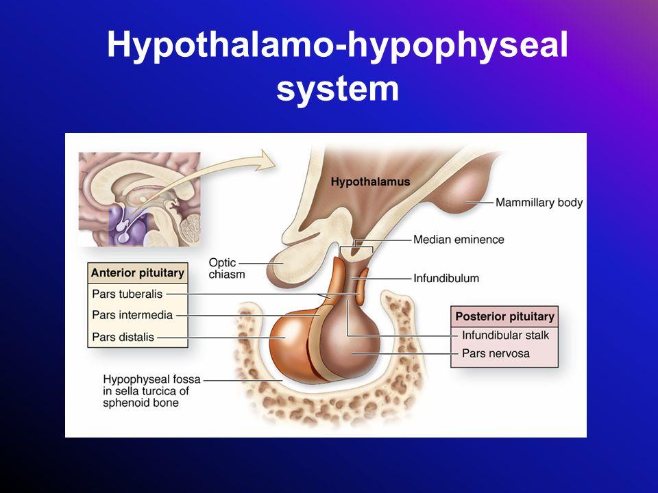 Hypothalamo-hypophyseal system
