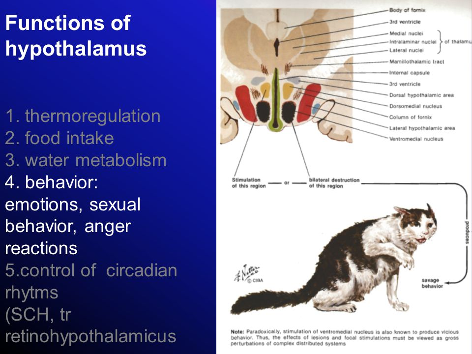 Functions of hypothalamus 1. thermoregulation 2. food intake 3