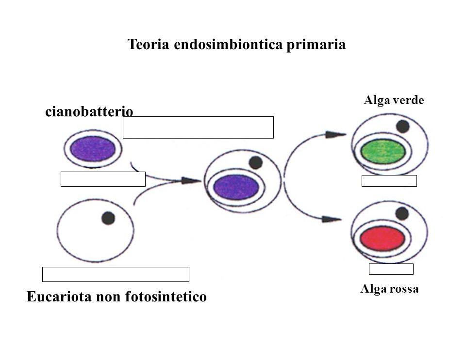 Teoria endosimbiontica primaria Eucariota non fotosintetico