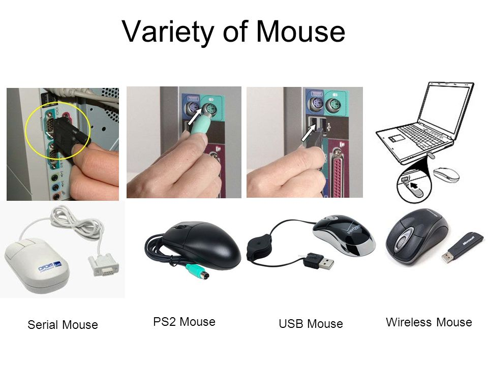 Variety of Mouse Serial Mouse PS2 Mouse USB Mouse Wireless Mouse