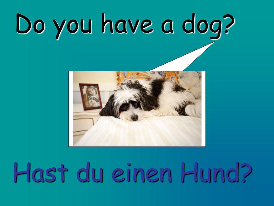 Do you have a dog Hast du einen Hund