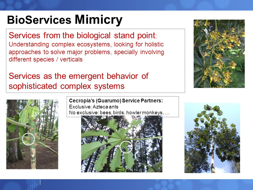 BioServices Mimicry
