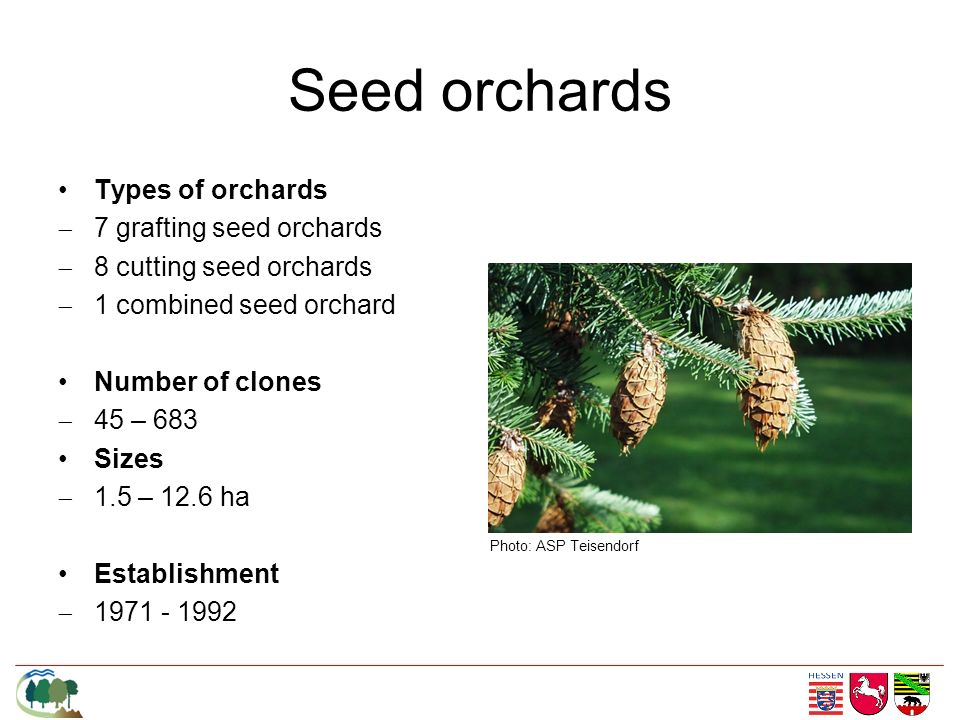 Seed orchards Types of orchards 7 grafting seed orchards