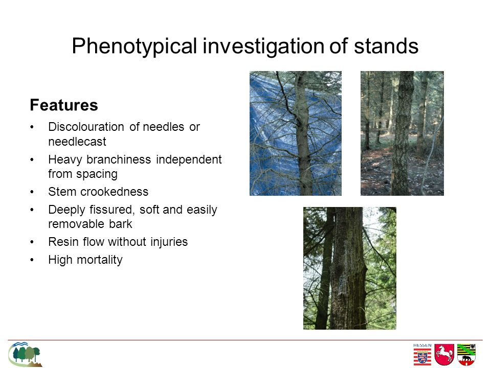 Phenotypical investigation of stands