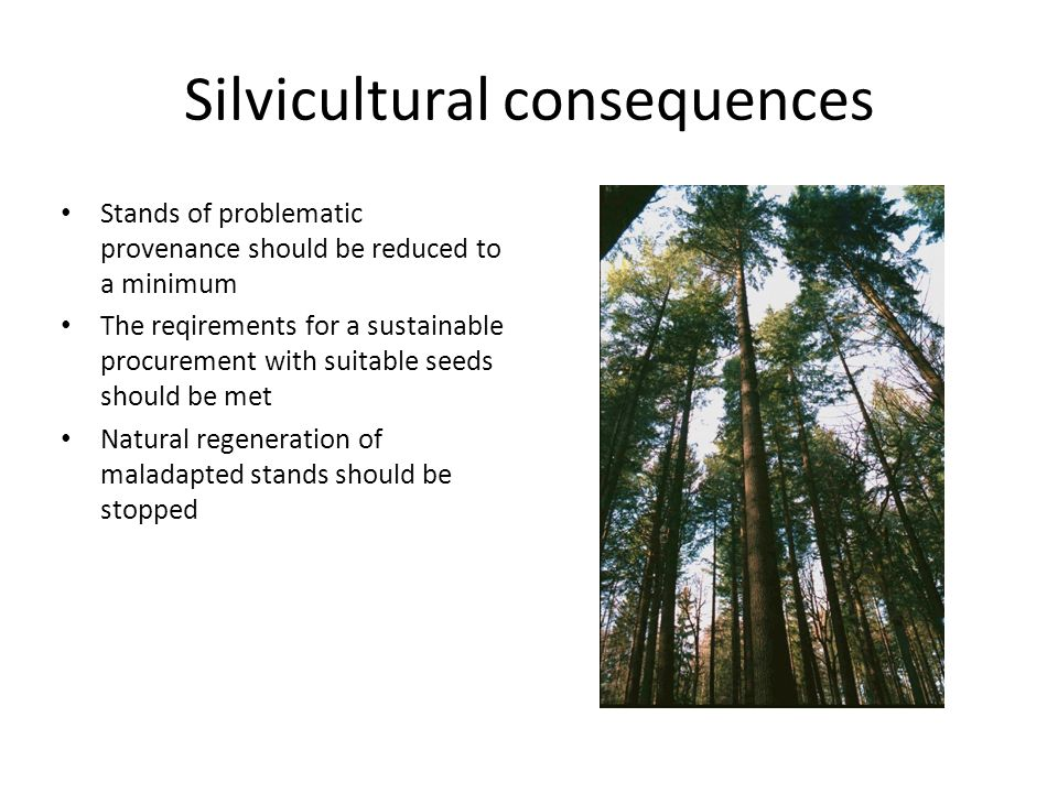 Silvicultural consequences